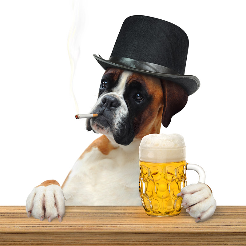 pub dog with beer